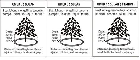 Furadan Durian cara menanam durian