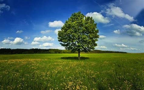 Imagenes De Arboles Zen | 191 por qu 233 las hojas de los 225 rboles son verdes