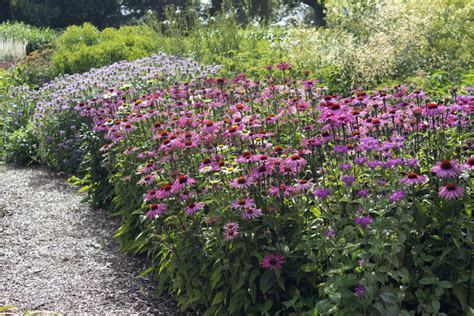 Garden Flower Borders Free Stock Photos Rgbstock Free Stock Images Summer Flower Border Micromoth August