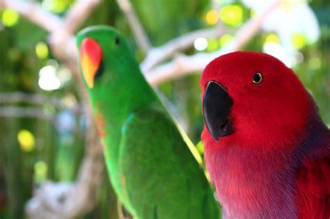 Tiket Bali Bird Park Dewasa promo bali bird park murah harga termurah di korina tour