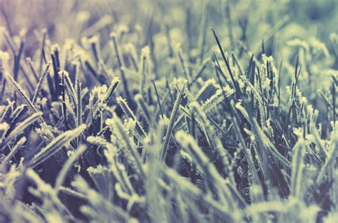 winter lawn care 5 crucial tips for winter lawn care in atlanta ga