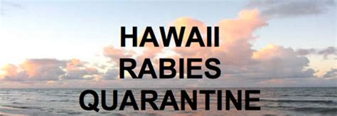 moving to hawaii with dogs hawaii pet quarantine and moving information island pet movers