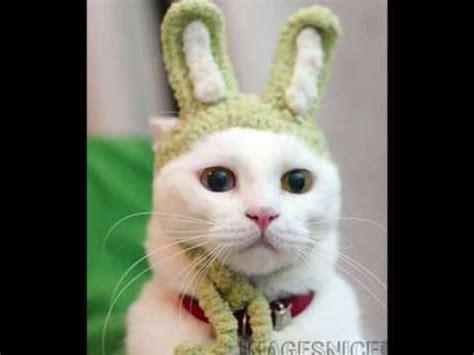 fotos muy bonitas de gatos gatitos muy bonitos youtube
