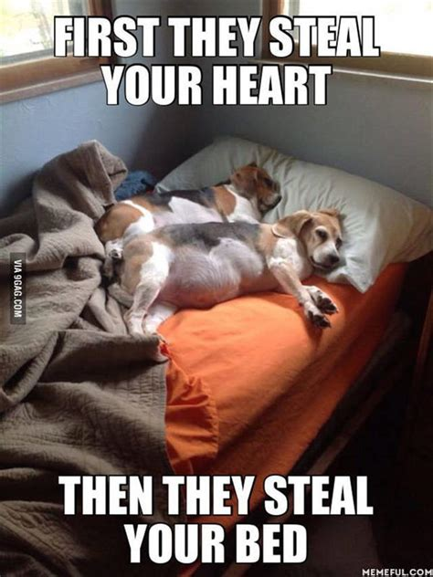 Funny Dog Pictures Memes - funny animal pictures of the day 21 pics funny animals