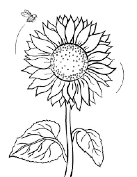 sunflower coloring pages for preschoolers img 742611