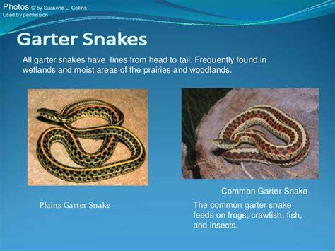 Garter Snake Vs Copperhead Your Kansas Snakes