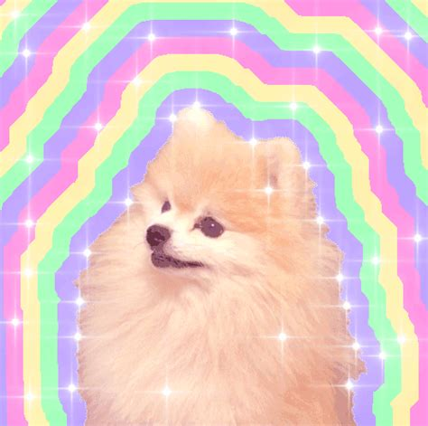 pomeranian gif 13 breeds matched up to their theme songs barkpost