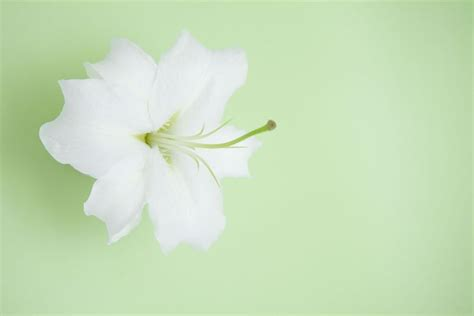 nice themes pictures free powerpoint background designs nice flower lily