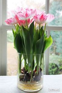 forcing tulip bulbs forcing bulbs in water flower