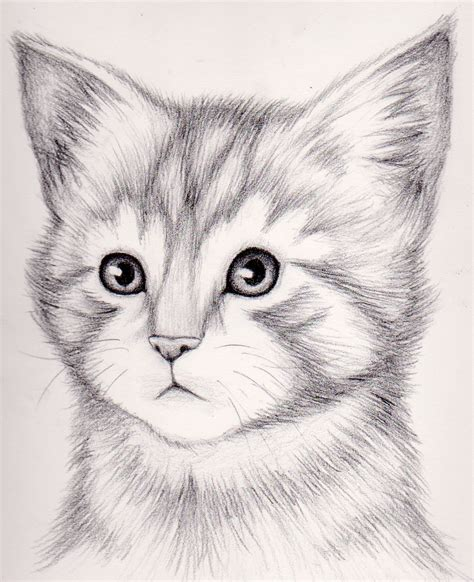 Drawing Kittens by How To Draw A Realistic Kitten Draw Realistic Kitten