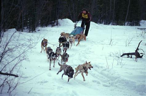 alaska list dogs sled race in tok alaska my is to do this one day alaska