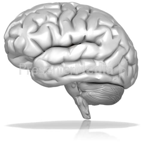 White Brain black and white brain pictures to pin on pinsdaddy