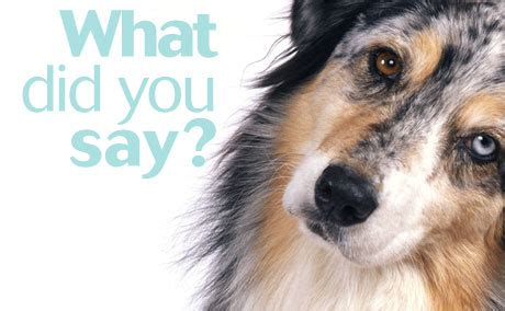 hearing loss in dogs client handout understanding hearing loss in dogs