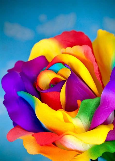 flower colors christiancross â ù ø ù ï â â â â â â â u â â â â â