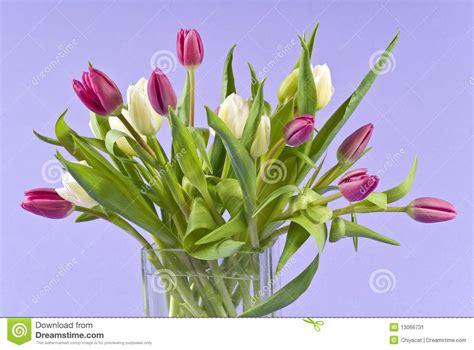 tulipani in vaso mazzo di tulipani in un vaso di vetro immagine stock