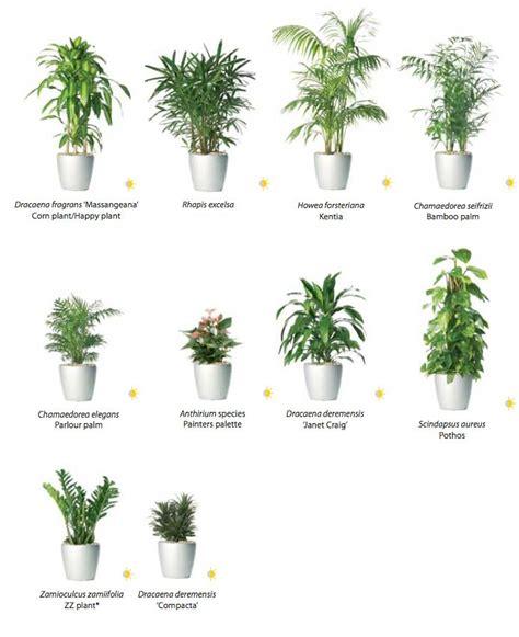low light bathroom plants low light bathroom plants חיפוש ב garden