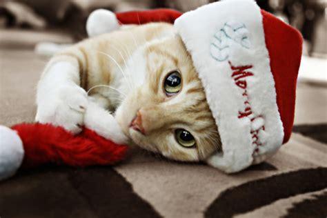 meow   santa hats bro  simpson