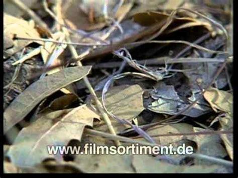 tiere für den garten lebensraum wiese ein biotop f 227 188 r viele insekten