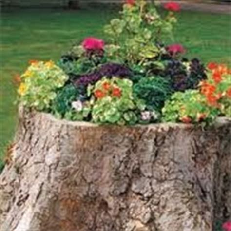 Tree Stump Planter Pot by 17 Best Images About Tree Stumps On Gardens