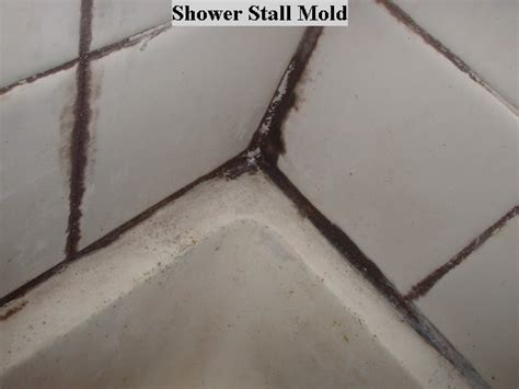 what is black mold in bathroom tip of the day shower mold ask my contractor
