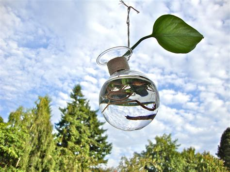 Glass Hanging Vase by Hanging Glass Vase Without Plant Modern By