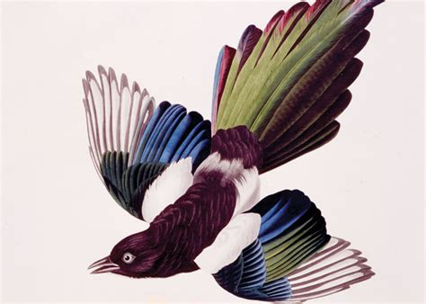 john j audubon s birds of america exhibits displays