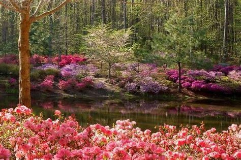 Callaway Gardens In by Callaway Gardens Places