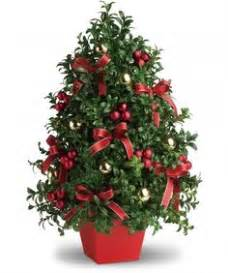 boxwood tabletop christmas tree no trip to the crowded tree lot needed decorate the home with our truly original tree