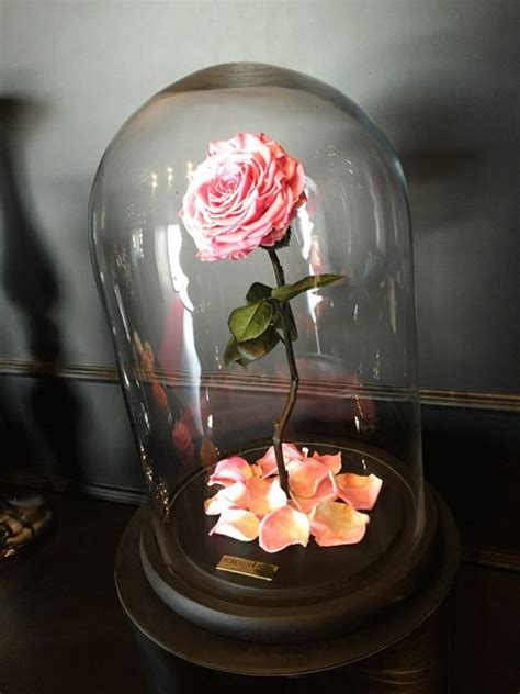 forever rose in glass actual quot natural beauty and the beast quot rose allegedly lasts