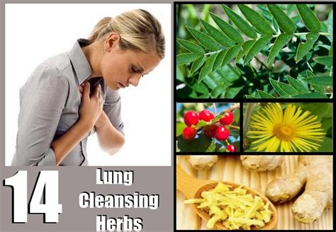 Best Lung Detox by Lung Cleansing Herbs
