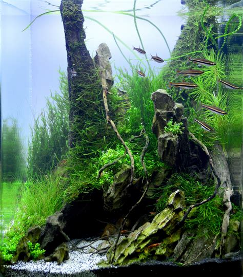 Aquascaping Rocks For Sale by Quot Back In The Quot 30l Aliaksei Kirhizau Babruysk Belarus Dennerle Nano Cube 174 Contest