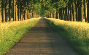beautiful pathway wallpaper
