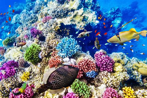The Great bleaching threats to the great barrier reef airislife