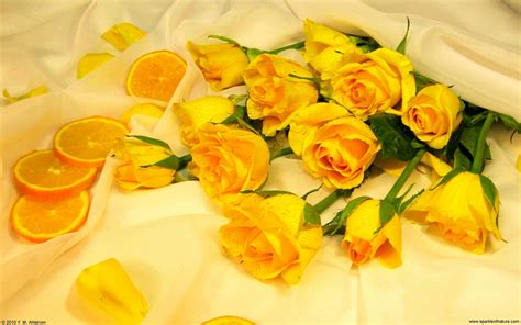 desktop wallpaper yellow roses yellow rose wallpapers wallpaper cave
