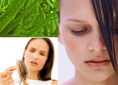 Cara Cepat Menumbuhkan Rambut Dengan Green Alami cara menumbuhkan rambut dengan lidah buaya
