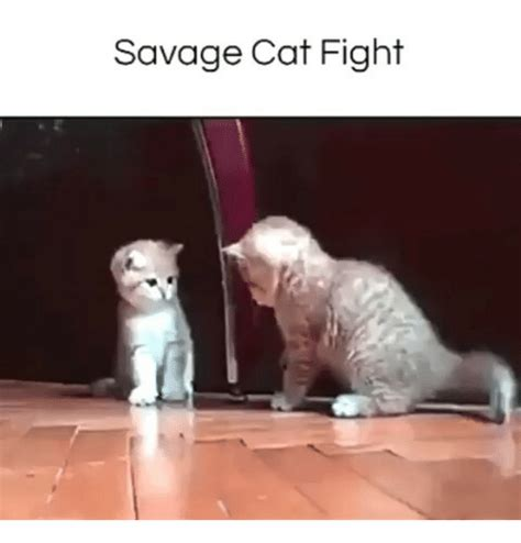 Cat Fight Meme - 25 best memes about cat fight cat fight memes