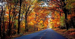 ten fall foliage drives fuel rewards 174 blog