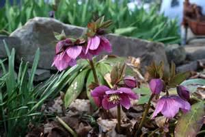 winter blooming plants berkeley garden coach