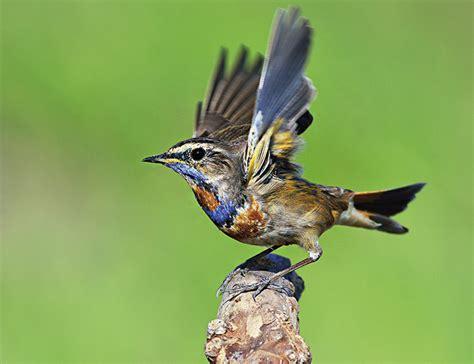 birdwatching seri 225 l abc o pozorov 225 n 237 pt 225 ků 193 b 237 čko cz
