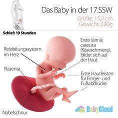 wann erste kindsbewegungen das ist der embryo in der 5 ssw der schwangerschaft