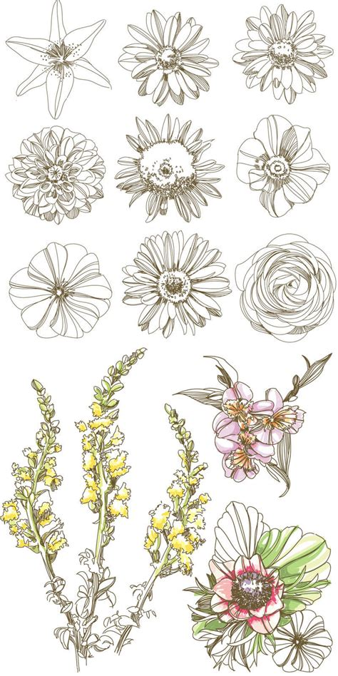 flower doodle ai flowers buds and plant vector free