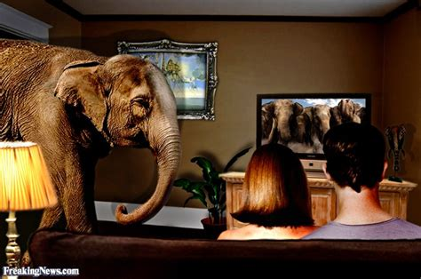 elephant in the room exle read me deadly find that book lists of useful lists for bibliophiles