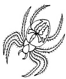 spider coloring coloring picture of spider