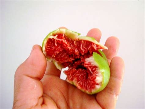 best fig forum which fig variety is best in these three