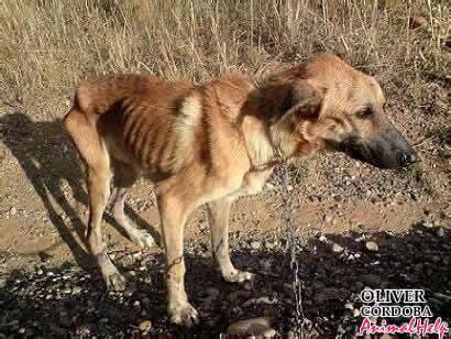 imagenes de animales maltratados 191 qu 233 hacer contra el maltrato animal perros maltratados