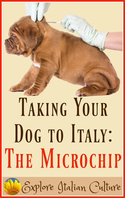 best pet microchip the pet microchip what it is and how to get one