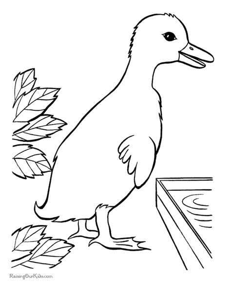 duck drawings for kids coloring home