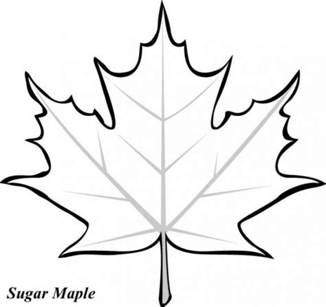 fall leaf coloring pages fall leaves coloring pages coloringsuite