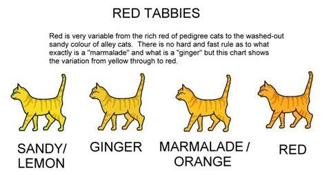 ginger colour chart 28 best stuff images on pinterest colour chart cat