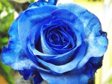 E M O R Y Fleurs 17emo122 fleuriste lasalle florist nini fleuriste nini florist lasalle valentin 233 raire
